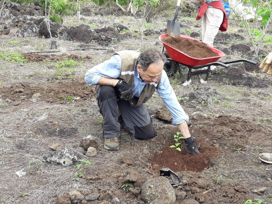 As part of his Conservation work in Ecuador for older adults, a Projects Abroad volunteer helps planting indigenous plants.